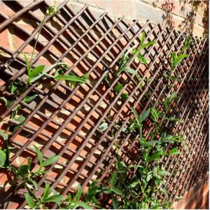Smart Garden Expandable Willow Trellis - 1.8m x 1.2m