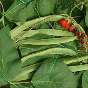 Smart Garden Pea & Bean Netting - 2m x 10m