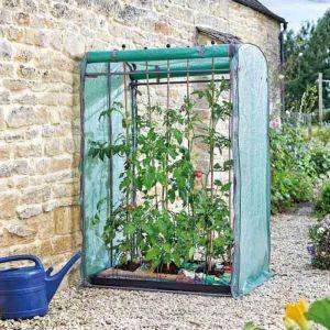 Smart Garden Tomato Gro-Zone Max