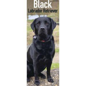 Black Labrador Retriever Calendar – 2022