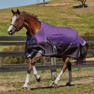 Weatherbeeta ComFiTec Plus Dynamic Standard Neck Lite Rug - Purple/Black