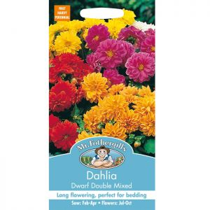Mr Fothergill's Mixed Dahlia Dwarf Double Seeds