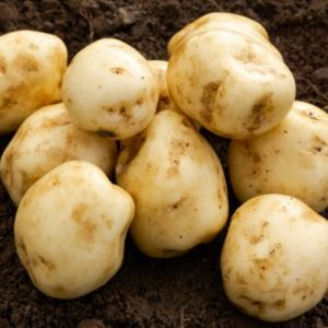 Formost Seed Potatoes, 2kg - First Early
