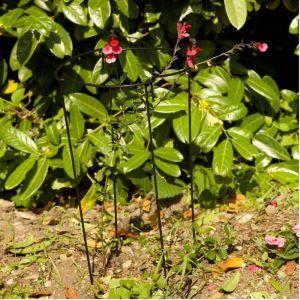 Smart Garden Gro-Links - Set of 4, 25cm x 70cm
