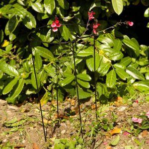 Smart Garden Gro-Links - Set of 4, 30cm x 90cm