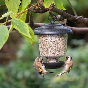 Jacobi Jayne Little Lantern Bird Feeder – 0.9L