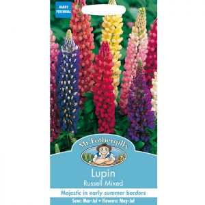 Mr Fothergill's Mixed Russell Lupin Seeds