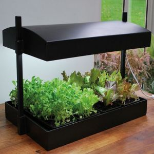 Garland Grow Light Garden - Black
