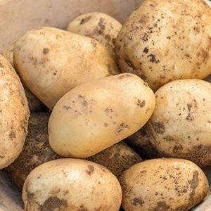 Pentland Dell Seed Potatoes, 2kg - Maincrop