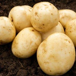 Pentland Javelin Seed Potatoes, 2kg - First Early