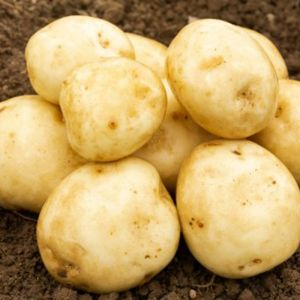 Rocket Seed Potatoes, 2kg - First Early
