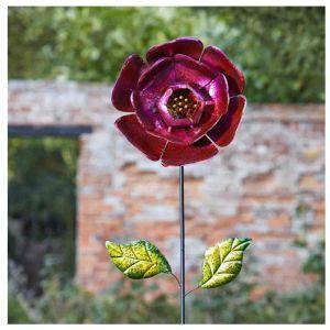 Smart Garden Ruby Red Bloom