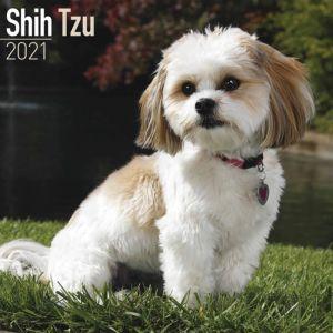 Shih Tzu Calendar 2021