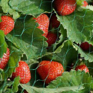 Smart Garden 15mm Fruit Garden Netting, Green – 2m x 5m