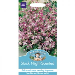Mr Fothergill's Night Scented Stock Seeds