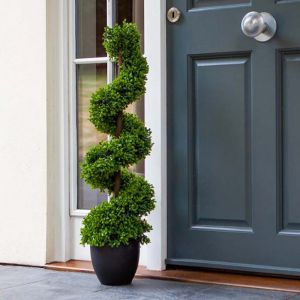 Smart Garden - Topiary Twirl