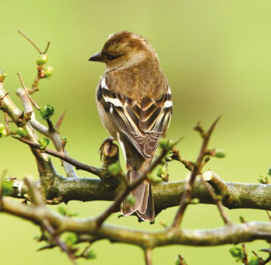 Bird Care at Charlies
