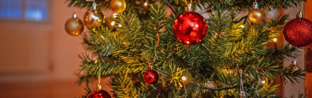 LET'S GET FESTIVE - Shop Christmas Trees