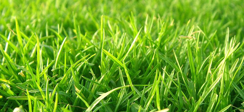 Lawn in order